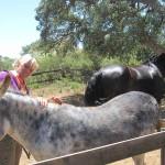 paard en ezel coaching